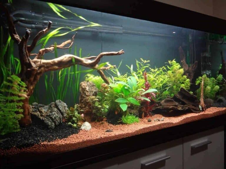 9 plantas de acuario con pocos requerimientos de luz