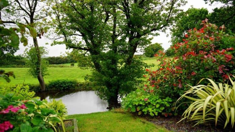 13 Consejos para construir un estanque de jardín