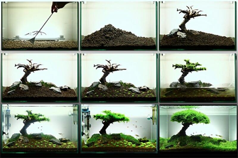 proceso de creacion de arbol de java